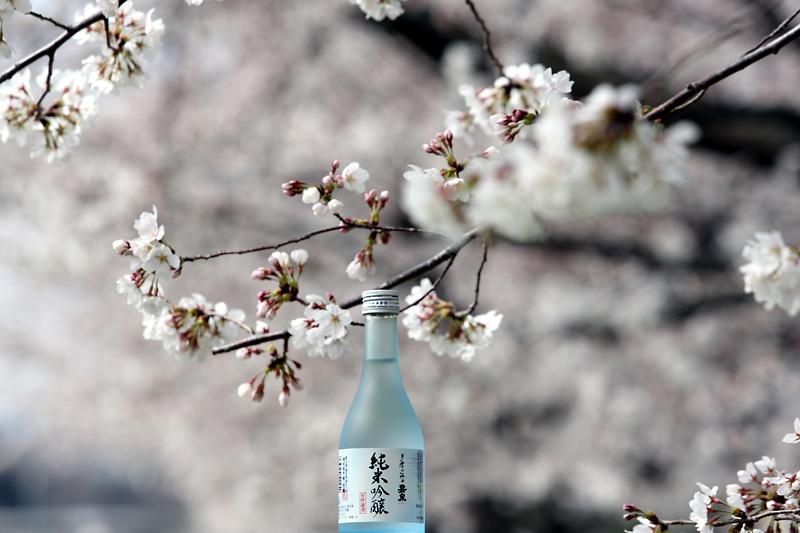 春 純米吟醸
