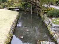 田村分水~今年も訪れています