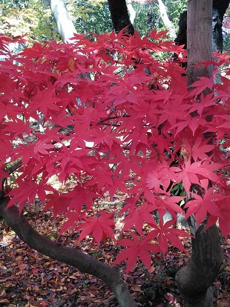 紅葉真っ盛り~NO.2