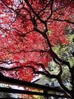 紅葉真っ盛り~NO.3
