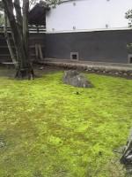 新緑の苔庭