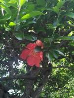 紅一点の花