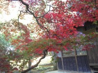 紅葉真っ盛りNO.1