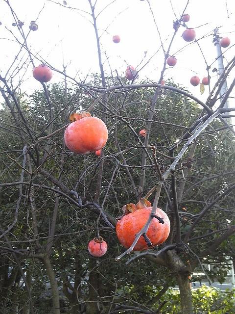 晩秋の柿は寂しそう