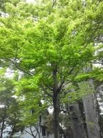 新緑が眩しいです