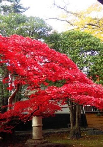 紅葉真っ盛りNO.2