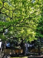 新緑真っ盛り