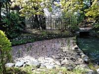 田村分水の花筏