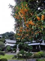 秋の訪れを告げる金木犀の香り