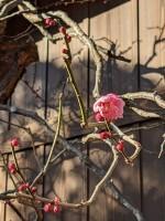 立春の朝(珍しくも今年は初午も同じ日)