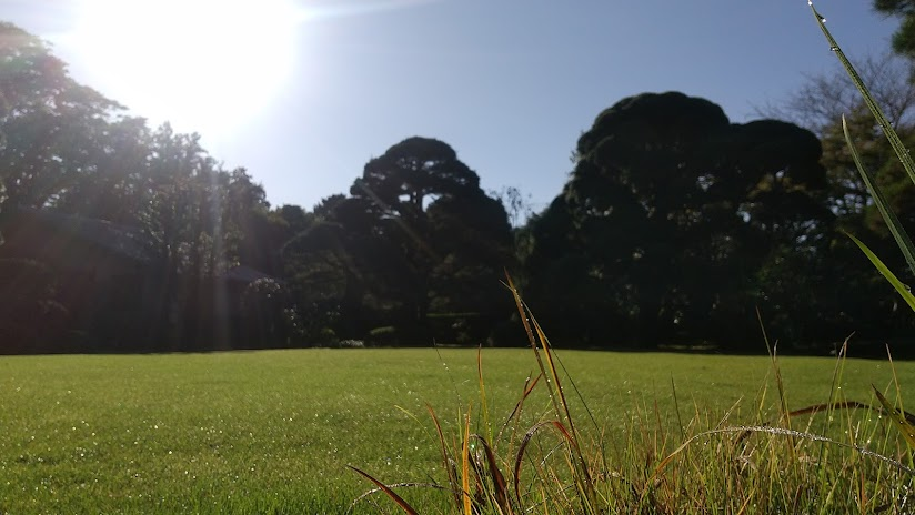 白露~前庭と朝の陽ざし